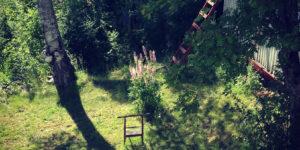 Bild av grön trädgård